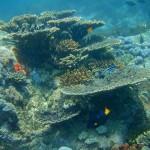 Diving&snorkling