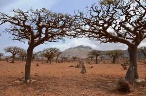 frankanscis trees on Homahil